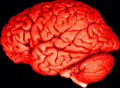 why does your brain like the color red